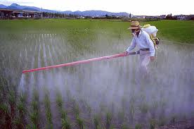 Pesticides sprayed on food are harmful to your health